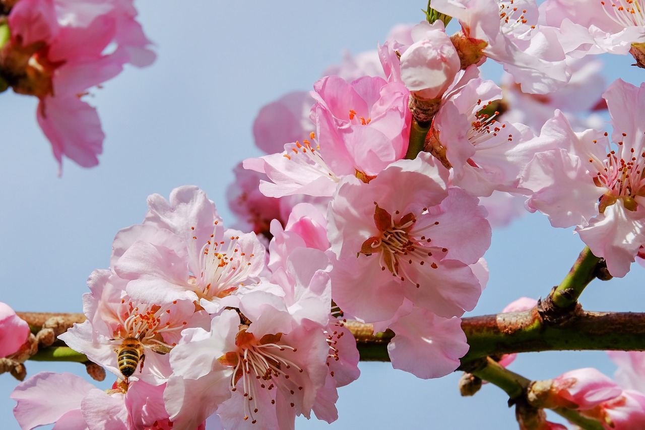 桜の開花とともに春がやってきました・・・・・  人事見直し倶楽部通信  №3316