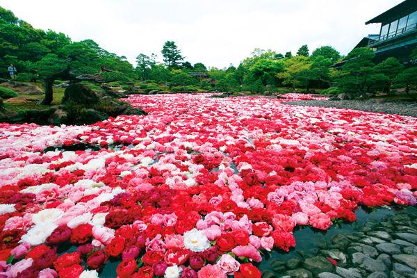 美しい景色を見ると心が癒される・・・・・  人事見直し倶楽部通信  №3356